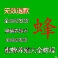 2019全新正版养蜂技术宝典_专家讲解_致富宝典